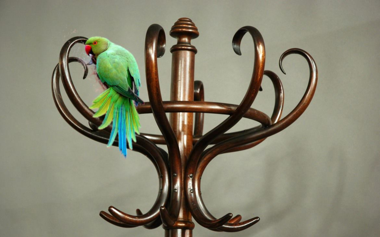 Parroquet in stile Thonet